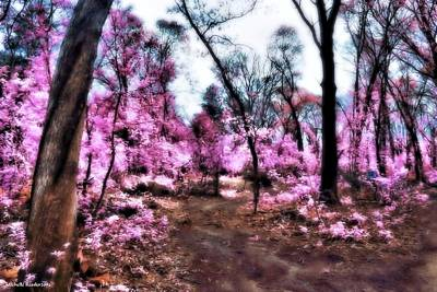Pink Forest Poster by Michelle Ressler