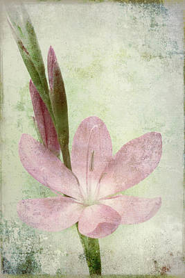 Pink Gladiolus On Green Poster