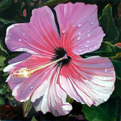 Pink Hibiscus With Raindrops Poster by Marionette Taboniar