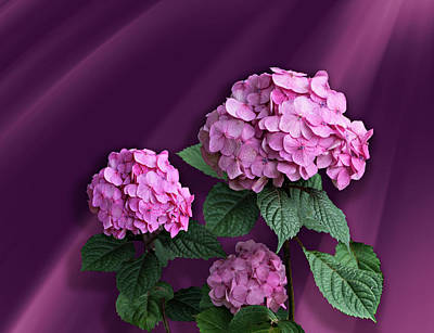 Pink Hydrangea Poster by Judy Johnson