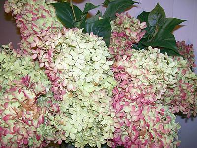Poster featuring the digital art Pink Hydrangeas by Barbara S Nickerson
