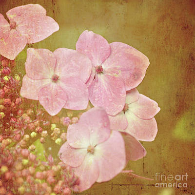 Poster featuring the photograph Pink Hydrangeas by Lyn Randle
