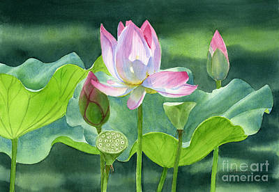 Pink Lotus Blossom  Buds And Seed Pods Poster