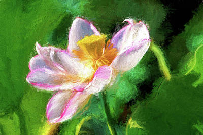 Pink Lotus Poster by Geraldine Scull