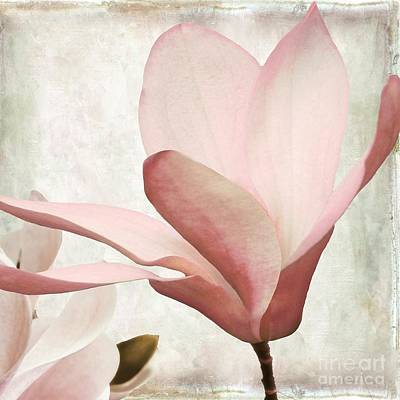 Pink Magnolia Sunwashed Poster by Mindy Sommers