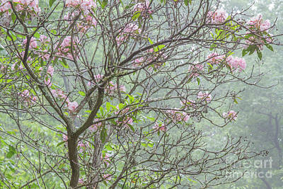 Poster featuring the photograph Pink Mountain Laurel by Chris Scroggins