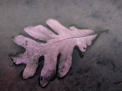 Pink Oak Leaf Poster by Jean Noren