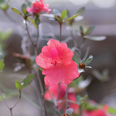 Pink Orange Flower Poster
