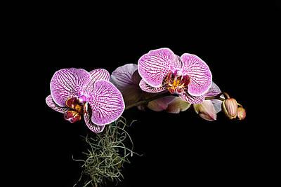 Pink Orchids Poster by Gary Dean Mercer Clark