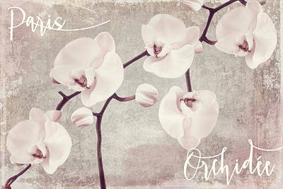 Pink Orchids Poster by Mindy Sommers