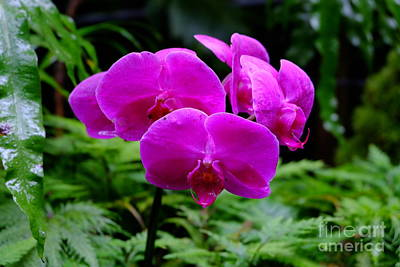 Pink Orchids Poster by Mini Arora
