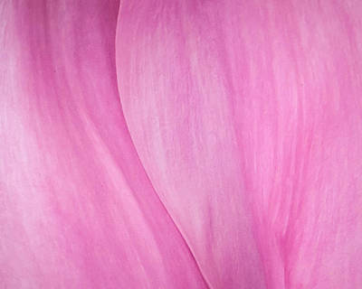 Poster featuring the photograph Pink Peony Perfection by David Coblitz