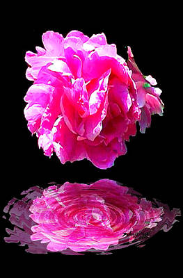 Pink Peony Reflections Poster