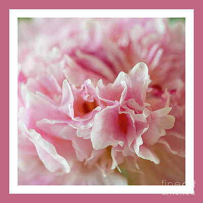Poster featuring the photograph Pink Perfection by Wendy Wilton