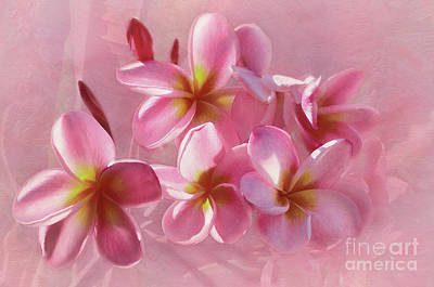 Poster featuring the photograph Pink Plumeria Pastel By Kaye Menner by Kaye Menner