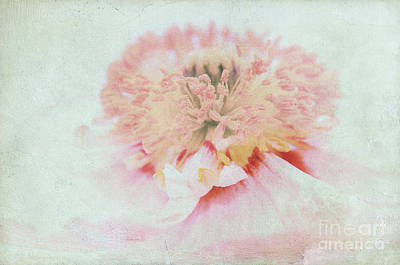 Pink Poppy Poster by Angela Doelling AD DESIGN Photo and PhotoArt