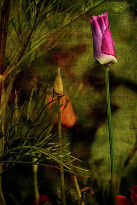 Poster featuring the photograph Pink Poppy by Fred Denner