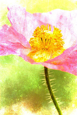Pink Poppy On Green Poster by Carol Leigh