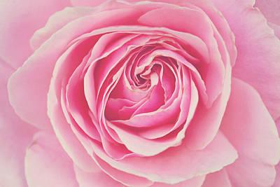 Pink Rose Petals Poster by Melanie Alexandra Price