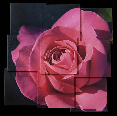 Pink Rose Photo Sculpture Poster by Michael Bessler