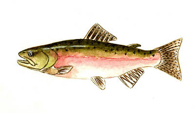 Pink Salmon Poster by Michael Vigliotti