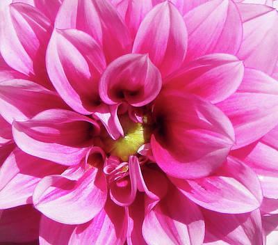 Pink Summer Flower Macro Poster