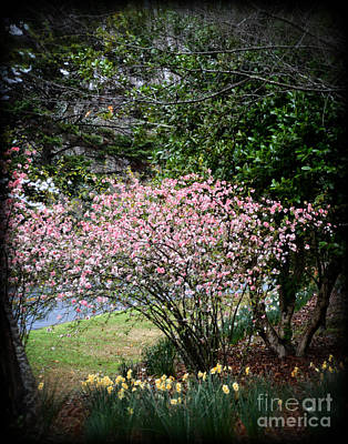 Pink Tree And Daffodils Poster by Eva Thomas