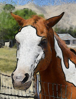 Poster featuring the photograph Pinto In The Pasture Portrait  by Barbara Snyder