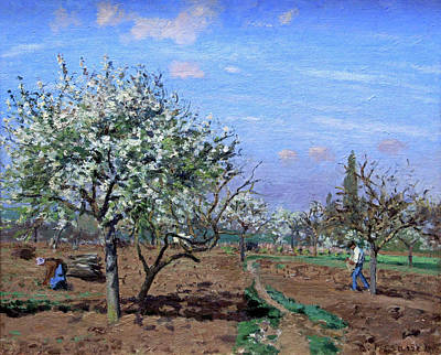 Pisssarro's Orchard In Bloom, Louveciennes Poster