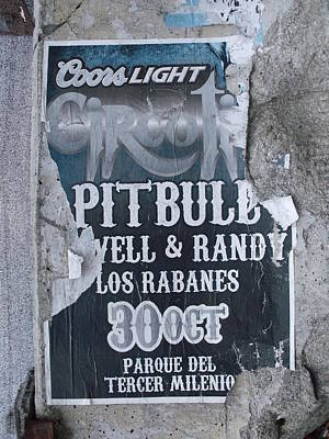 Pitbull Poster by Anna Villarreal Garbis