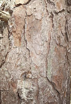 Pitch Pine Trunk Poster by Rauno Joks