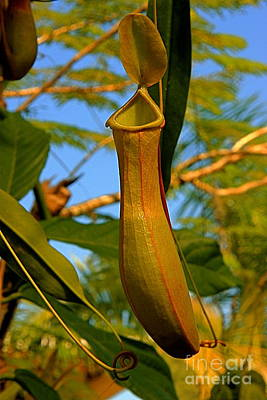 Poster featuring the photograph Pitcher Plant by Nicola Fiscarelli
