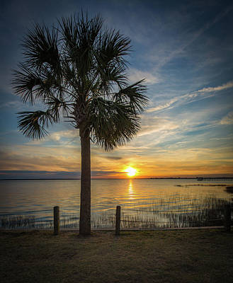 Pitt Street Bridge Palmetto Tree Sunset Poster