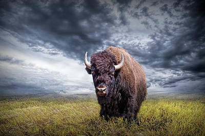 Plains Buffalo On The Prairie Poster