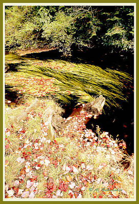 Plant Life In An Autumn Stream Poster by A Gurmankin