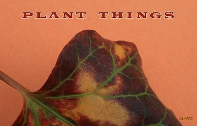 Plant Things Poster by Jean Clarke