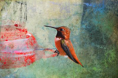 Plate 048 - Hummingbird Grunge Series Poster