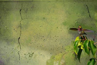 Plate 087 - Hummingbird Grunge Series Poster