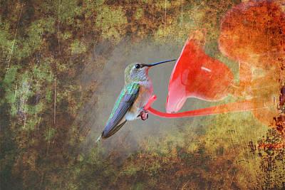 Plate 153 - Hummingbird Grunge Series Poster