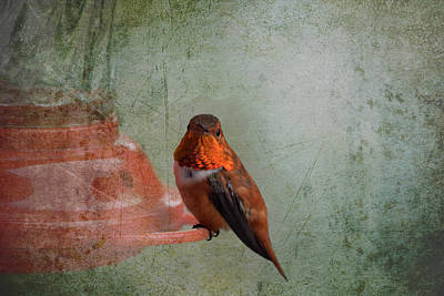 Plate 164 - Hummingbird Grunge Series Poster