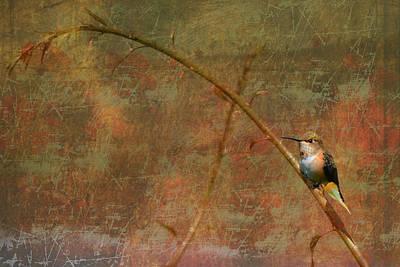 Plate 225 - Hummingbird Grunge Series Poster
