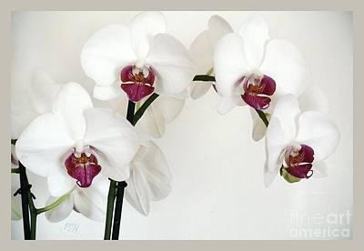 Platnum Beauty Orchids Poster by Marsha Heiken
