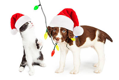 Playful Christmas Kitten And Puppy Poster