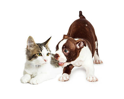 Playful Puppy And Annoyed Kitten Poster by Susan Schmitz