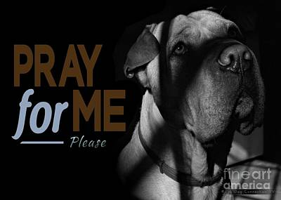 Poster featuring the digital art Please Pray For Me by Kathy Tarochione