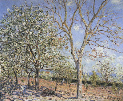 Plum And Walnut Trees In Spring Poster by MotionAge Designs