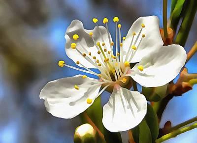 Plum Blossom Poster by Tracey Harrington-Simpson