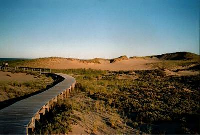 Plum Island Dunes Poster