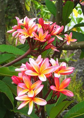 Plumeria - Pink And Orange Poster