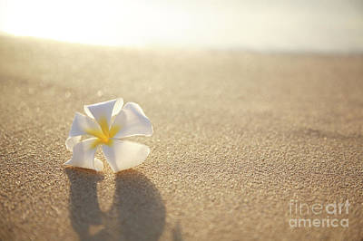 Plumeria On Beach I Poster by Brandon Tabiolo - Printscapes